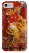 Christmas Tree Worms, Bonaire IPhone Case