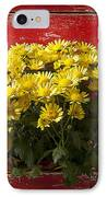 Daisy Plant In Drawers IPhone Case by Garry Gay
