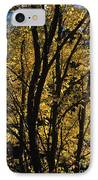 Golden Colors Of Autumn In New England  IPhone Case