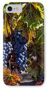 Grapes Of The Napa Valley IPhone Case by Garry Gay