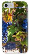 Grapes Ready For Harvest IPhone Case by Garry Gay