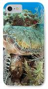 Green Sea Turtle On Caribbean Reef IPhone Case