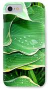Hosta Leaves And Waterdrops IPhone Case