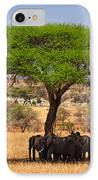 Huddled In Shade IPhone Case
