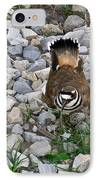 Kildeer And Eggs IPhone Case by Douglas Barnett