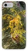 Leafy Sea Dragon Against Colorful Rocks IPhone Case by Max Allen