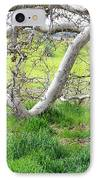 Low Branches On Sycamore Tree IPhone Case