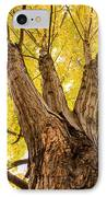 Maple Tree Portrait IPhone Case