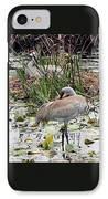 Nesting Sandhill Crane Pair IPhone Case by Carol Groenen