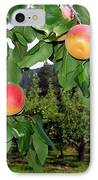 Okanagan Apricots IPhone Case by Will Borden