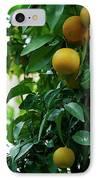 Orange Tree IPhone Case by Lorraine Devon Wilke