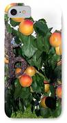 Ripe Apricots IPhone Case by Will Borden