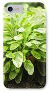 Sage Plant IPhone Case by Elena Elisseeva