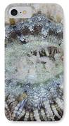 Sand Anemone, Bonaire, Caribbean IPhone Case by Terry Moore