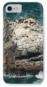 Sea Lions Sunning IPhone Case by Suzanne Gaff