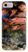 Shoulderbar Soldierfish IPhone Case by Dave Fleetham - Printscapes