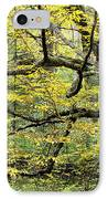 Swamp Birch In Autumn IPhone Case