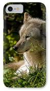 Timber Wolf Portrait IPhone Case by Michael Cummings