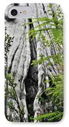 Tree Of Life - Duncan Memorial Big Western Red Cedar IPhone Case by Christine Till