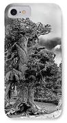 Twisted Old Bristlecone Pine Above Crater Lake - Oregon IPhone Case by Christine Till