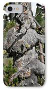 Whitebark Pine Tree - Iconic Endangered Keystone Species IPhone Case by Christine Till