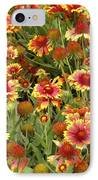 nature - flowers -Blanket Flowers Six -photography IPhone Case