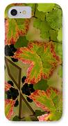 Vineyard Quilt IPhone Case