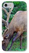 Royal Bull Elk IPhone Case