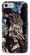 2000 Year Old Olive Tree IPhone Case