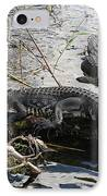 Alligators In An Everglades Swamp IPhone Case