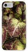 Coleus Plant IPhone Case