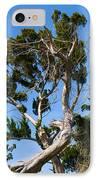 Florida Cedar Tree IPhone Case