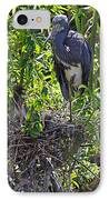 Heron With Chick In Nest IPhone Case