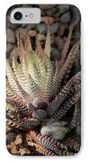 Octo Cacti IPhone Case