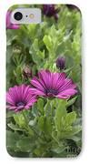 Osteospermum Flowers IPhone Case