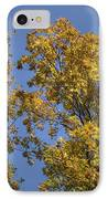 Pin Oaks In The Fall No 1 IPhone Case