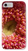 Pink Gerbera Daisy IPhone Case