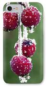 Seasonal Colors IPhone Case