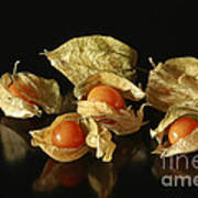 A Taste Of Columbia Physalis Aztec Golden Goose Berry  Poster