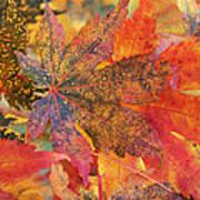 Autumn Audacity I Poster