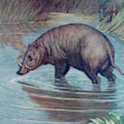 (babirusa Alfurus)        Date 1909 Poster