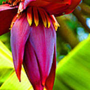Banana Flower Glow Poster