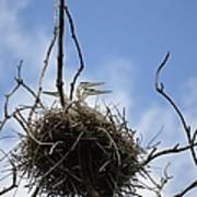 Blue Heron Rookery 7212 Poster