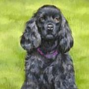 Budwood The Black Cocker Spaniel Poster