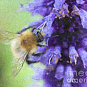 Bumblebee On Buddleja Poster