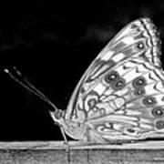 Butterfly In Black And White Poster