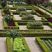 Cabbage Garden Chateau Villandry  Poster