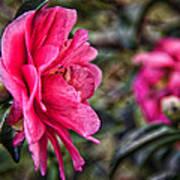 Camellia De Mamie Poster