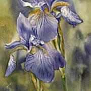 Double Blue Irises Poster