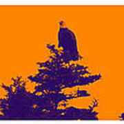 Eagle Scout At Sunset Poster